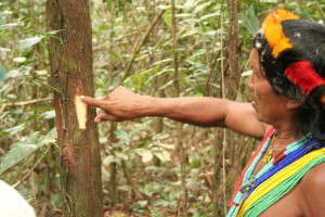 Listen how shaman Amasina imitates the sound Red-handed Tamarin
